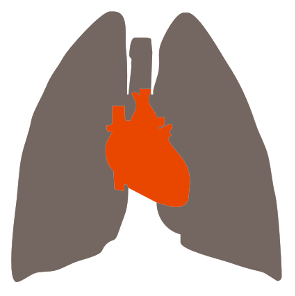 Heart_and_Lung-1