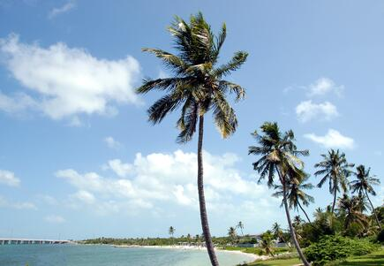 Beach landscape with palm trees.