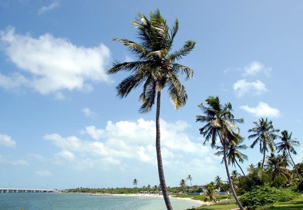 beach-landscape-sea-coast-tree-water-484625-pxhere.com