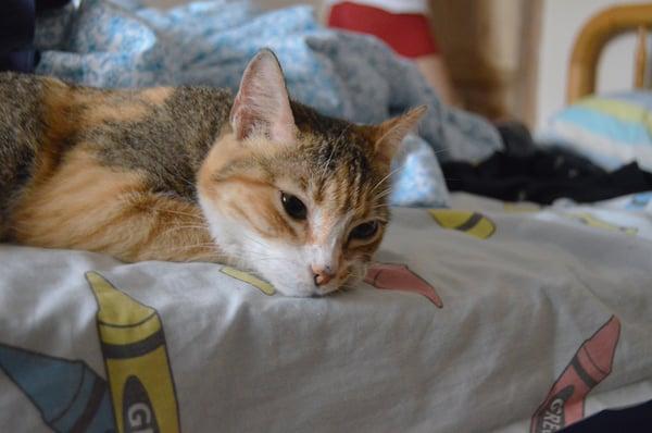 cat-cat-bed-sleeping-126770