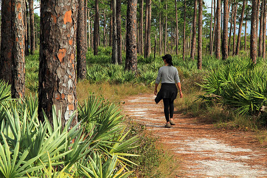 Hiker on a trail in Florida