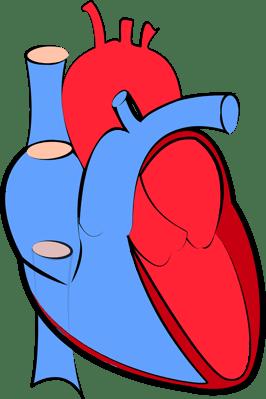 human-heart-1700453_1280