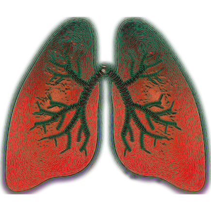 lung-4051083_1280