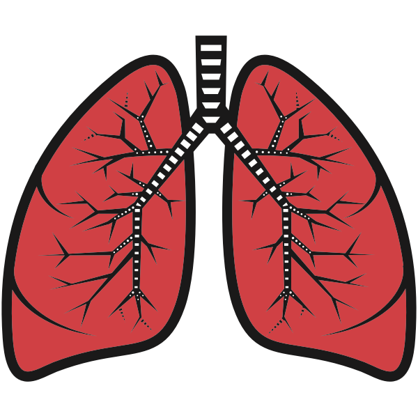 Illustration of human lungs