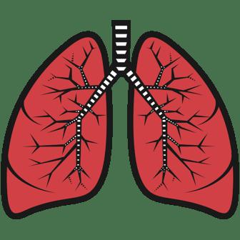 lungs--publicdomainvectors-image