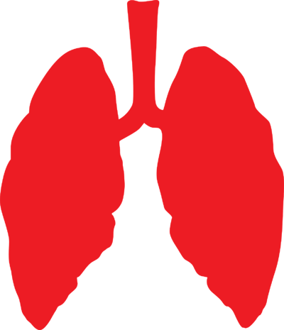lungs-3464515_1920-1