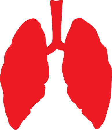 lungs-3464515_1920