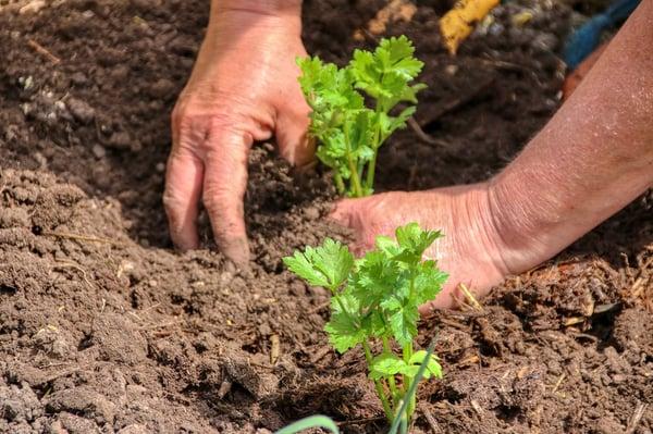 plant-5214521_1280