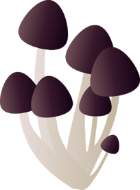 Fungal pneumonia